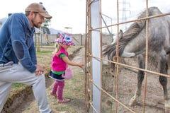Vati und Tochter werden ein Pferd mit einer Karotte eingezogen lizenzfreie stockbilder