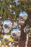 Vatican Christmas Tree Reflection Stock Photography
