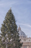 Vatican Christmas Tree Royalty Free Stock Photo