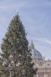 Vatican Christmas Tree Royalty Free Stock Photo