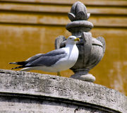 Vatican seagull bird Italy architecture Stock Photography