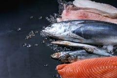 Vatiery of raw fresh fish royalty free stock image