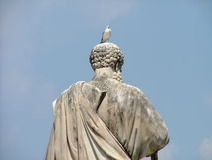 Vatikan-Seemöwe Stockfotos