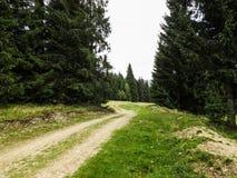 Vatra Dornei, bergtur Royaltyfria Bilder