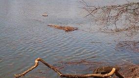 Vattenöversvämningen översvämmar på högvatten, hög kopiering för dynamiskt område stock video