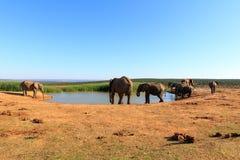 Vatten - afrikanBush elefant Arkivfoto