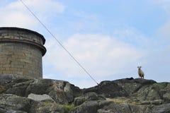 Vatten-behållare och aries på ön Utsira, Norge Royaltyfri Fotografi