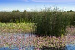 vatten- ekosystem Royaltyfri Fotografi