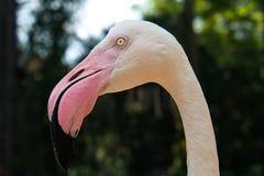 Vatten- fågel för flamingo royaltyfria bilder