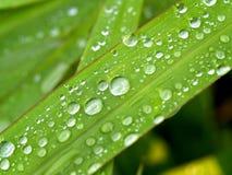 vatten för 03 droppe Arkivfoto