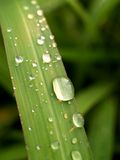 vatten för 11 droppleaves Royaltyfri Fotografi