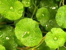 vatten för 11 leaf Royaltyfria Foton