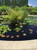 Vatten för blommaträdgård Royaltyfria Foton