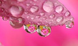 vatten för droppblommamakro royaltyfri bild