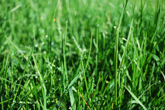 vatten för droppgräsgreen Royaltyfri Foto