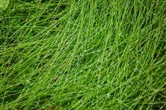 vatten för droppgräsgreen abstrakt bakgrundsnatur Royaltyfri Bild