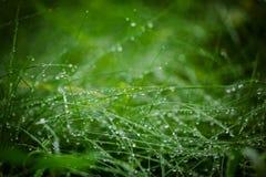 vatten för droppgräsgreen abstrakt bakgrundsnatur Sele Royaltyfria Bilder