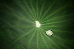 vatten för droppleaflotusblomma Royaltyfri Fotografi