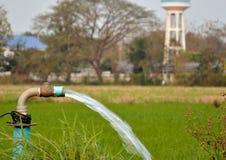 Vatten för fältris royaltyfria foton