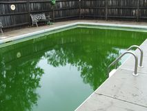 Vatten för gröna alger för Inground pöl Arkivfoton