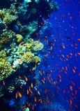 vatten för korallfiskgrupp Arkivbild