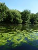 vatten för landsplatstree Arkivfoton