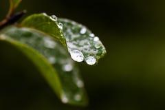 vatten för makro för leaf för 4 droppar för bakgrund blått Fotografering för Bildbyråer