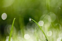 vatten för reflexion för green för adobergbdroppgräs arkivfoto