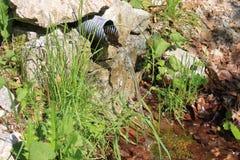 vatten för skogkällfjäder Royaltyfria Foton