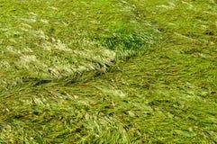 vatten för swamp för bakgrundsgräsgreen royaltyfria foton