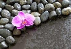 vatten för rocks för härlig liten droppeorchid purpurt Royaltyfri Bild
