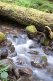 Vatten flödar ner den mossiga bäcken lösa Forest Stream Waterfall Arkivbild