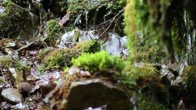 Vatten från den härliga lilla bäcken i skog stock video