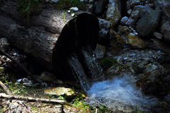 Vatten från en stam Fotografering för Bildbyråer