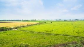 Vatten från fördämningbruk för fullvuxna ris Arkivfoton