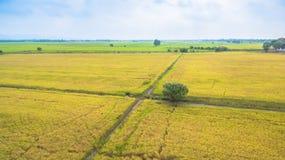 Vatten från fördämningbruk för fullvuxna ris Arkivbild