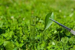 vatten för 2 leafprovrör Arkivbilder