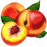 vatten för persikor för aquagruppmålarfärg Fotografering för Bildbyråer