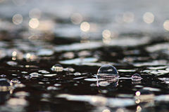 Vatten för vårliten vikis Arkivfoto
