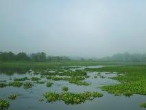 Vatten-fyllda hyacinter i morgonen. Royaltyfria Foton