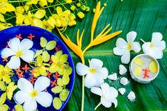 Vatten i den bunkeSongkran festivalen i Thailand Royaltyfria Foton