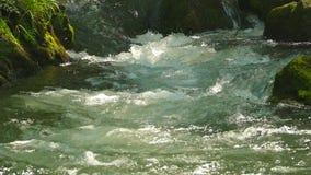 Vatten i en snabb bergström stock video