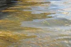 Vatten i en stads- kanal med vatten- växter Royaltyfri Foto