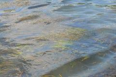Vatten i en stads- kanal med vatten- växter Arkivfoton