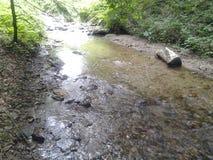 Vatten i skog Royaltyfria Foton