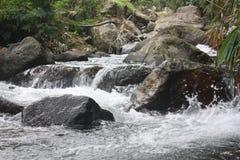 Vatten i skog Arkivbild