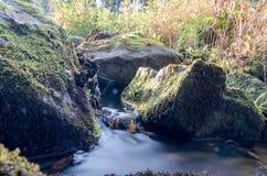 Vatten i skog Arkivfoton