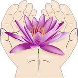 Vatten lili och hand Royaltyfri Bild