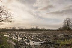 Vatten loggade fält Arkivbild