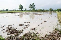 Vatten loggat in fält Fotografering för Bildbyråer